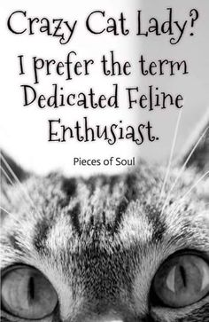 I love cats, crazy cats, crazy cat lady, cat quotes, cat memes Funny Cats, Funny Animals, Cute Animals, Crazy Cat Lady, Crazy Cats, Happy Paw, Cat Behavior, Cat People, Cat Quotes