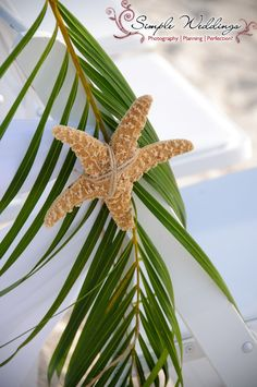 Simple palm frond and starfish aisle decorations really make this Florida beach wedding pop!
