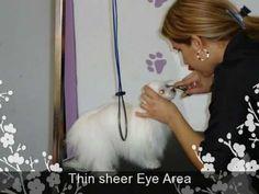 How to Groom a Mini Maltese http://maltese-care.com/blog/maltese-grooming-tips