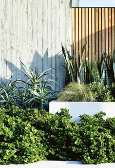 Modern Garden Design Modern planting and sharp lines give this rooftop terrace and garden a contemporary appeal.Modern Garden Design Modern planting and sharp lines give this rooftop terrace and garden a contemporary appeal. Tropical Landscaping, Modern Landscaping, Backyard Landscaping, Backyard Designs, Tropical Gardens, Landscaping Company, Landscaping Ideas, Backyard Ideas, Garden Ideas