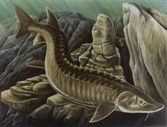 Ancient Chippewa Stories Describes A Giant Sturgeon In Lake Superior The Huge Legendary Fish