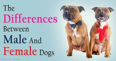 Interesting! See how male dogs and female dogs differ in terms of their behaviors and moods.