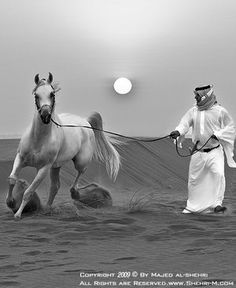 This reminds me of when I was riding Arabic horses in the desert in Ras Al Khaimah.