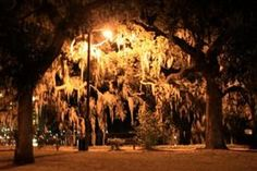 Erie moss covered trees in downtown Savannah,...