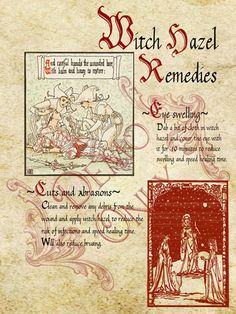 BOS ~ Witch hazel page
