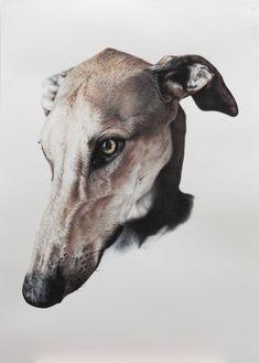 Galgo español, Greyhound, Ilustración, Lápiz, Pencil, Crayon, Grafito, Caran d'Ache. Dog portrait Cow, Painting, Greyhounds, Graphite, Dogs, Display, Animales, Backgrounds, Painting Art