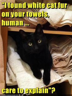 """I found white cat fur on your towels, human...care to explain""?"