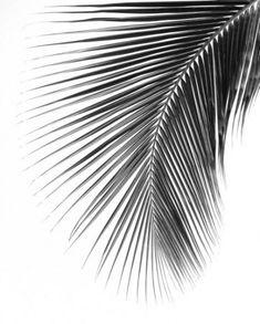 Palm Leaf Print Black And White Photography Abstract Tropical Leaf Summer Art Tropical Palm Leaves 8 x 10 inches Unframed Black Art Painting, Black And White Painting, Black And White Portraits, Black And White Pictures, Black And White Photography, Black And White Prints, Black And White Sketches, Ink Painting, Black And White Leaves