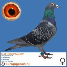 "NL.16-1148805 ""Super 805"""