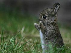 animaux mignon dans la nature - Recherche Google
