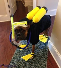 Scuba Diver - DIY Halloween Costume for Dogs