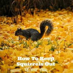 How to get rid of squirrels with baking soda squirrel - How to keep squirrels away from garden ...
