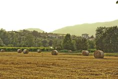 Gold from the countryside. San Giacomo di Veglia, Italy