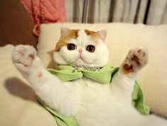 Snoopy the cat pictures. Over 30 of the most adorable pictures of Snoopy the cat. Possibly one of the cutest cats the internet has ever seen Cute Cartoon Animals, Funny Animals, Cute Animals, Baby Animals, Cute Animal Drawings, Cute Drawings, Snoopy Cat, Flat Faced Cat, Cutest Cats Ever