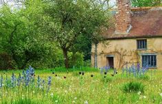 Wild flower meadow at Cothay Manor Gardens near Wellington in Somerset. England.