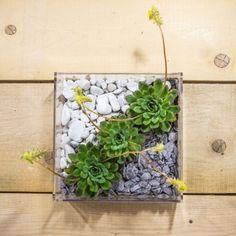 Plexiglass & Idee originali: Vaso composizione piante grasse in plexiglass trasparente. #piante #grasse #design #plexiglass #designtrasparente