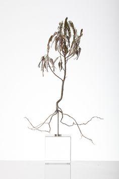 Nic Bladen / Erica plukenetti / sterling silver & bronze / 33 cm high