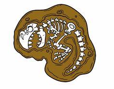 dibujos de restos fosiles dinosaurios - Buscar con Google