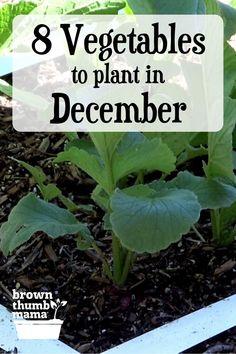 Planting Vegetables, Growing Vegetables, Growing Plants, Perennial Vegetables, Winter Vegetables, Container Gardening Vegetables, Garden Seeds, Garden Plants, Permaculture