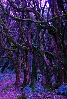 Mystical Purple Forrest