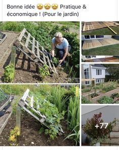 Outdoor Structures, Plants, Gardens, Good Ideas, Plant, Planets