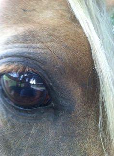 Horses, Pictures, Animals, Ideas, Photos, Animales, Animaux, Photo Illustration, Horse