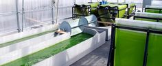 Drinking beer, for algae! #sustainable #biomass