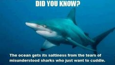 animals, sharks