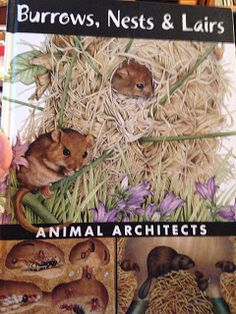 Animal architects! See how animals build with mud, sand, twigs, and grasses!