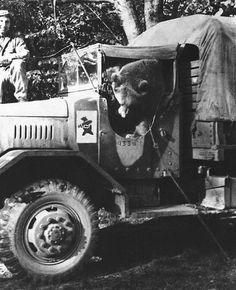 PRIVATE WOJTEK the Bear was a Syrian brown bear cub adopted by soldiers of the Artillery of the Polish II Corps. He was officially drafted into the Polish Army. During the Battle of Monte Cassino, Wojtek helped move ammunition. Wojtek Bear, Battle Of Monte Cassino, Spiegel Online, Different Types Of Animals, Bear Cubs, Held, Photos Du, Brown Bear, World War Two