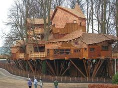 Awesome tree house/tree camp - almost a village on stilts!