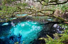 Juniper Springs, Ocala FL - From Interstate 75 at SR 40 in Ocala, drive east through Ocala and Silver Springs to reach the Ocala National Forest. This central Florida gem is located at the Ocala National Forest (about an hour from Gainesville) Florida Vacation, Florida Travel, Vacation Places, Dream Vacations, Vacation Spots, Travel Usa, Places To Travel, Visit Florida, Honeymoon Places
