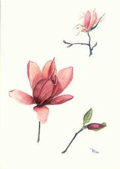 Watercolor magnolia, with great shades of dusty pink Watercolor Cards, Watercolor Print, Watercolor Illustration, Man Vs Nature, Magnolia Flower, Pink Lily, Botanical Art, Small Tattoos, Body Art