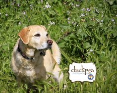 """""""Lucy"""", love to play in the #Garden area...!! Best shoot with Lucy.""""Cyndi Kuiper"""" Get perfect #pictures of your loving #pets from #ChickpeaPhotography. http://chickpeaphotographystudio.com/ #sfbayarea #sfdogs #lovedog #doglovers #SanfranciscoDogs #SfDogslife #Petphotos #doggiephotoshoot #smile #cute #eyes #buzzfeed #likemydog #ClickMyPetsPictures #mydogs #doggy #petlovers #puppies #mypets #PetPhotographersinEastBayArea #puppies #mypets #puppy #dogs #PetPhotography"""