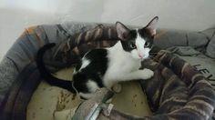 Pumba, gatito de 4meses en adopción. en Alacant - vibbo - 93313190