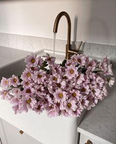 My Flower, Fresh Flowers, Beautiful Flowers, Pink Flowers, Sogetsu Ikebana, Flower Aesthetic, Ficus, Simple Pleasures, Planting Flowers