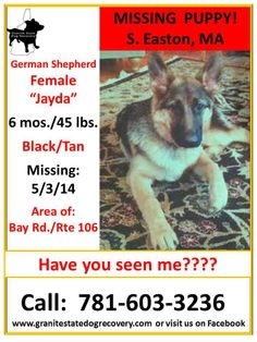 "5/5/14-SIGHTING UPDATE/SEEN TWO DAYS AGO Walking right along Bay Street, before Bassett Street  Missing Female German Shepherd Puppy: S. Easton, MA 5-3-14 ""Jayda"" is 6 mos./45 lbs. & Black & Tan. She is missing from the area of Bay Rd./Rte 106. Please share her flyer to help bring this baby home safely! Call: 781-603-3236"