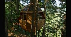 Jovem constrói casa oval em árvore de floresta canadense e vira sucesso na web