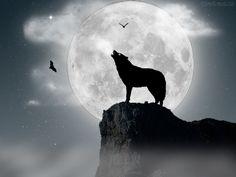 lobos na lua cheia - Pesquisa Google