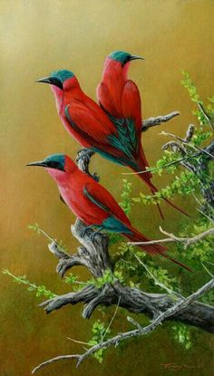 Carmine Bee Eaters by Wildlife Artist Jeremy Paul Most Beautiful Birds, Pretty Birds, Animals Beautiful, Exotic Birds, Colorful Birds, All Birds, Love Birds, Bird Drawings, Bird Pictures