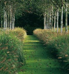 http://indigo—soul.tumblr.com/ Garden by Piet Blanckaert landscape architect