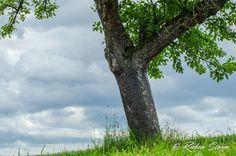 Baum  #Baum #RemsMurr #Wolken