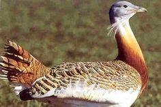 Os presentamos Life Esteparias un proyecto para salvar y proteger a las aves esteparias de Andalucía