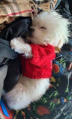 Cute Little Puppies, Cute Little Animals, Cute Dogs And Puppies, Baby Dogs, Little Dogs, Doggies, Animals And Pets, Funny Animals, Funny Animal Memes