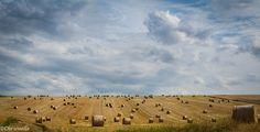 Pellenzfelder nahe Eich