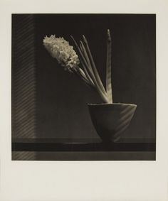 Robert Mapplethorpe - Hyacinth, 1987