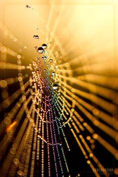 rainbow lit spiderweb