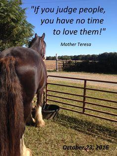 Kohler's Moonlight Sallie Be Inspired! Shire Horse, Mother Teresa, Farms, Moonlight, Horses, Puppies, Inspired, Homesteads, Cubs
