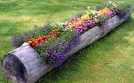 Hollow out and use a fallen log as a planter