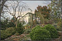 Hanging Gardens from Morris Arboretum